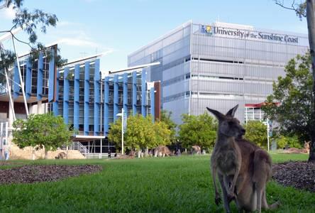Känguru vor der University of the Sunshine Coast